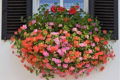 Garden Deco, Floral Wreath, Wreaths, Plants, Gardening, Decor, Balcony, Floral Crown, Decoration