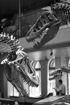 Dinosaur Hall    Natural History Museum, Los Angeles, CA.  July 2012.