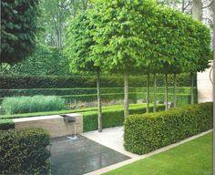 GAP Gardens - Formal hornbeams - The Laurent-Perrier Garden, sponsored by Laurent-Perrier - Gold medal winner at RHS Chelsea Flower Show 2009 - Image No: 0140763 - Photo by Michael Howes