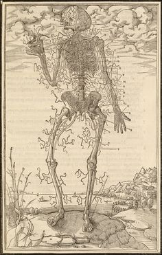La dissection des parties du corps humain...    Paris, 1546. Woodcut. National Library of Medicine.    Charles Estienne  (1504-ca. 1564)  [author]    Étienne de la Rivière  (d. 1569)  [anatomist]    A skeleton with a thin covering of tendons poses before an apocalyptic sky.