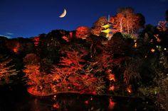 ホテル椿山荘東京の庭園で行われる紅葉のライトアップイベント。ホテルの森のような庭園に色づく木々が、夕暮れに近づく頃になるとライトアップされ、より一層鮮やかに映し出される。幻想的な空間で、秋を感じる1日を過ごしてみてはいかがだろう。