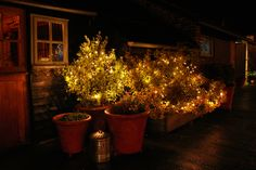 Pealights in the small outside shrubs at Upwaltham Barns by www.stressfreehire.com #venuetransformers