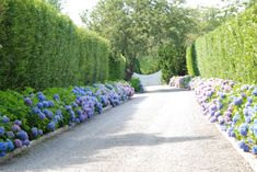 hydrangeas and hedge leading up to stunning gate. Driveway love!!