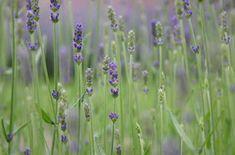Deel dit via social media: Garden Of Eden, Home And Garden, Garden Inspiration, Gardening Tips, Garden Design, Flora, Backyard, Spring, Green