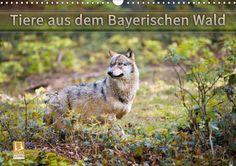 Tiere aus dem Bayerischen Wald - CALVENDO Kalender von CH Photography -  #calvendo #calvendogold #kalender #fotografie #tierfotografie #bayern
