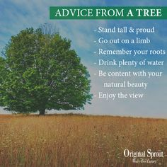 Who knew trees could give such good advice?! #motivation #inspiration #quote #quotes #love