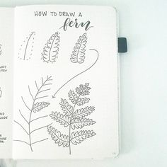 """2,639 Likes, 13 Comments - liz (@bonjournal_) on Instagram: """"This week's tutorial is how to draw a fern. It struck me that the repeating segments would make…"""""""