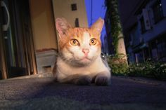 【みんなに教えてあげて】可愛いからって絶対ダメ!猫へのフラッシュ撮影は非常に危険 | CuRAZY [クレイジー]