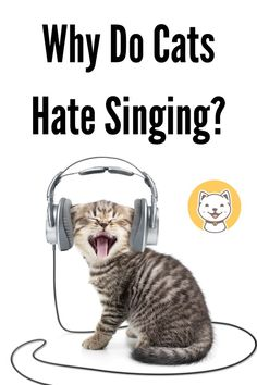 People usually come with some popular routines, such as hugging bolsters while sleeping, having breakfast with drinks, or working at night. You guys will have at least one of these. So how about regular singing Cute Cats, Funny Cats, Cat Info, Cat Care Tips, Cat Behavior, Cat Facts, Cat Health, Cat Lovers, Hug