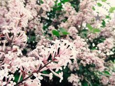 Gartenupdate Mai
