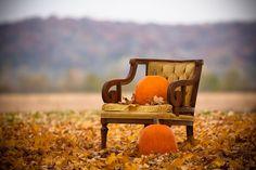 Seasonal Love: Pumpkin & leaves on a bench in an open field