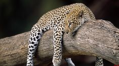 kenya africa | Reserve-Kenya-Africa fotos de Reserve-Kenya-Africa . El sitio de las ...