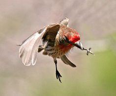 Bird flys off with a twig