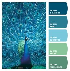 Instantly turn any picture into a palette with ColorSnap, created for you by Sherwin-Williams. Paint Color Palettes, Colour Pallete, Colour Schemes, Color Combos, Peacock Color Scheme, Peacock Colors, Peacock Feathers, Room Colors, House Colors