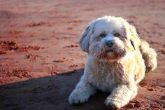Agnes Gundel photographer: Everyday dog project