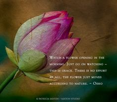 Watch a flower opening in the morning. Just go on watching - this is Grace. There is no effort at all. The flower just moves according to Nature. Quotes About Flowers Blooming, Bloom Quotes, Rebel Quotes, Great Meaning, Soul Shine, Cancerian, Live In The Present, Garden Quotes, Self Reminder