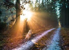 Wir wünschen allen einen gesunden interessanten schönen sonnigen und mit aufregenden Entdeckungen gesäumten Weg durch das Jahr 2019 Country Roads, Instagram