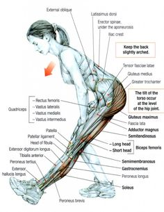 Stretching: How to Stretch the Hamstrings #exercising #fitness