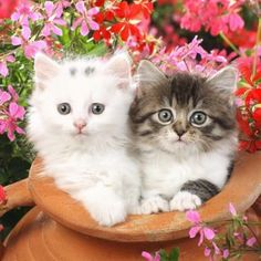 Adorable kittens (100 pieces)