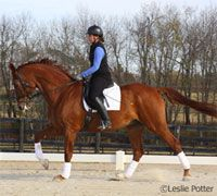 Horsemanship How-to: Help Your Horse Hold the Canter... Help your horse stay in the canter with these tips. via HorseChannel