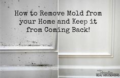 remove mold from your home and keep it from coming back, cleaning tips, home maintenance repairs