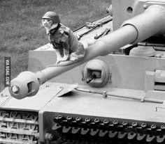 Waffen SS kitty ready for war. on the barrel of a 88 on a tiger.