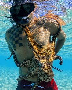Tako Tuesday brought to you by// @ikaika.poki and this fatty #tako #takotuesday #venturehawaii #pokesquid #dafin #seafleas @bombereyewear