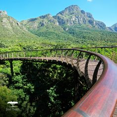 Have you spent much time in the Kirstenbosch Botanical Gardens? Next time you're there, make sure to take a walk over the aerial walkway. It is a steel and timber structure, 130m long that curves it's way through the trees. The Walkway takes the visitor from the ground to above the canopy, giving incredible views of the mountains, Gardens and Cape Flats. Have you been Have you been there lately? How many types of trees did you see?