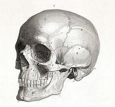 Movement of bones when we age hence the sagging of the skin