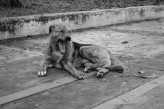 Rouge et Noir a Badem Ciflik: Memy K Ios - B/W Photography Bw Photography, Stray Dog, My Eyes, Ios, Quotes, Animals, Red, Quotations, Qoutes