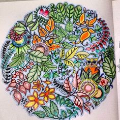 Joanna Basford Adult Coloring Colouring Books Enchanted Mandala Owl Book Chance Forests