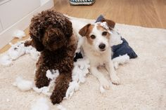 9 Easy Ways to Puppy Proof your Home Puppies are cute, but they can also be destructive. How do you know if your home is puppy-proof? How do you keep your home from being destroyed by a puppy? How can you prevent accidents, injuries and other problems as a new pet owner? There are many…