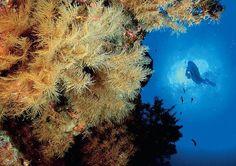 Submarinismo El Hierro