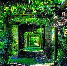 Fairchild Garden: yoga no jardim do paraíso!
