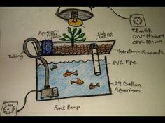 DIY Aquaponics, Aquaponics for Dummies, The Easiest DIY Indoor Aquaponics System, How to video. Aquaponics system.