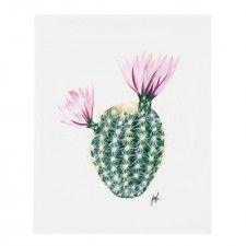 Flowering Cacti Print, Palm Desert