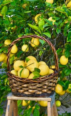 Growing fruit trees in your backyard may seem complicated, but with the right backyard orchard how to, you could have fresh lemons before you know it. Get your backyard orchard knowledge and get started growing fruit trees today. Click the pin! Citrus Trees, Fruit Trees, Organic Gardening, Gardening Tips, Meyer Lemon Tree, How To Grow Lemon, Fast Growing Trees, Grow Your Own Food, Lemon Lime