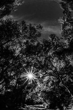 Parque Nacional de Itatiaia, RJ