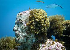 La Evolución Silenciosa (The Silent Evolution) - contemporary underwater sculpture, and reef growing....Cancun
