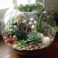 Resultado de imagen para terrarium originales