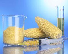 12 bizarre examples of genetic engineering