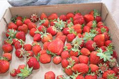 Fresh strawberries from the Heartland  Harvest Garden