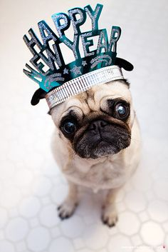 Happy New YearNow please go to your party and show everyone my picture! By the way, don't forget your hat!