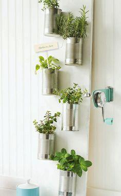 DIY: Grow Herbs In your Kitchen