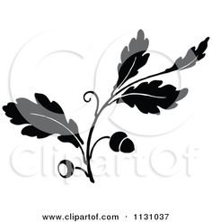 Google Image Result for http://images.clipartof.com/small/1131037-Clipart-Of-A-Retro-Vintage-Black-And-White-Oak-Branch-With-Acorns-1-Royalty-Free-Vector-Illustration.jpg