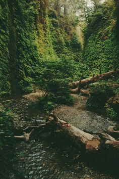 #forest #lost #inspiration #hipster