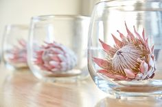 Proteas in Glass Vases