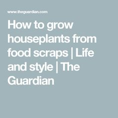 How to grow houseplants from food scraps | Life and style | The Guardian