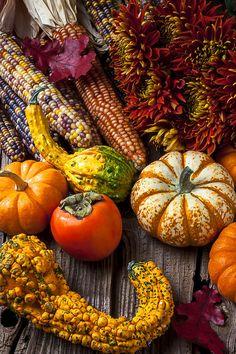 Autumn Still Life Colors Photograph