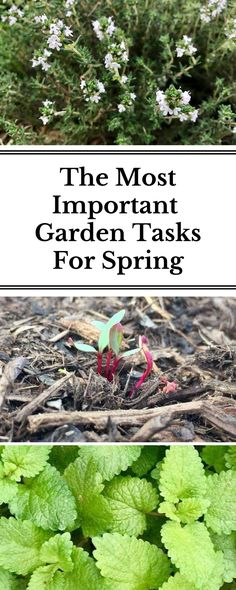 It's that time of year that both experienced gardeners and newbies alike can't wait to spend more time outside. This article lets you know the most important garden tasks to ensure you have a successful, productive year in the garden!